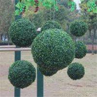 Dekoratyvinė gėlė burbulas, žalias, pakabinamas