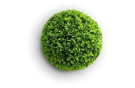 Dekoratyvinė gėlė burbulas, žalias,. 10; 20; 25; 30; 45 cm