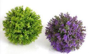 Buksmedis dekoratyvinė gėlė