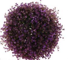 Dekoratyvinė gėlė burbulas, violetinė