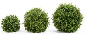 Dirbtiniai gėlė burbulas SAMŠIT ivairiu spalvu ir didžiu, žalios spalvos, 10; 20; 25; 30; 45 cm .