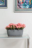 Loveliai gėlėms MAGNOLIJA - JERSEY