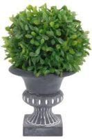 Buksmedis su vazonų